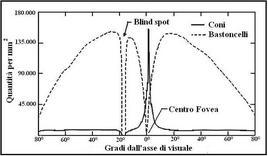 Distribuzione dei coni e dei bastoncelli nella retina