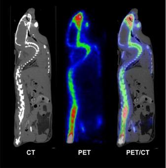 Esempio di registrazione di due immagini di uno stesso oggetto ottenute con due diverse modalità. Fonte: Dip. Fisica Univ. Pisa