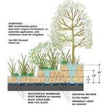 Piantumazione in relazione allo spessore del terreno vegetale. Fonte: City of Portland, Oregon