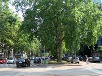 Viale alberato di Milano. Fonte: foto Moccia