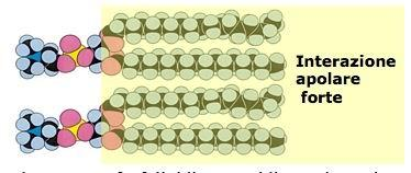 Impacchettamento fosfolipidi con acidi grassi saturi