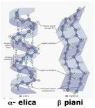 Fonte: immagini modificate da Becker, Kleinsmith, Hardin, Il mondo della cellula, Edises, 2006