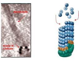 Micrografia elettronica e schema