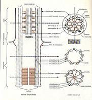Sezione longitudinale di un ciglio e sue sezioni trasverse