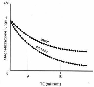 Curve di decadimento del segnale T2 in funzione di TE