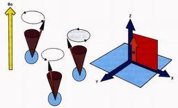 Comportamento dei protoni in un campo magnetico esterno (B0)