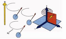 Stimolazione dei protoni con RF e allontanamento di M dall'asse z verso il piano trasversale x, y.