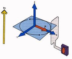 Stimolazione dei protoni con RF di 90 gradi e abbattimento di M sul piano trasversale x, y