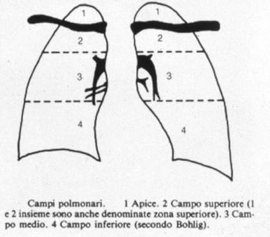 Suddivisione campi polmonari