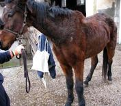 Horse with hirsutism