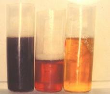 Urine di cavallo affetto da rabdomiolisi che mostrano una colorazione differente in funzione della concentrazione di mioglobinuria