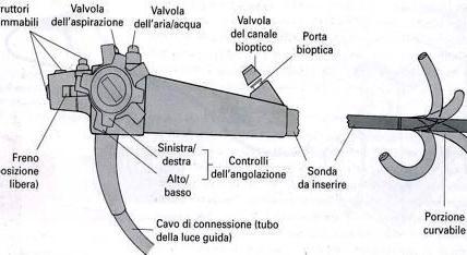 Gastroscopio elettronico