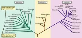 Figura 14. Albero filogenetico della vita