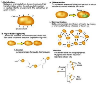 Figura 2. Caratteristiche dei sistemi biologici cellulari