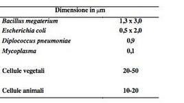 Figura 5. Dimensione di alcuni microrganismi procarioti e cellule vegetali e animali