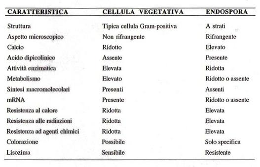 Tabella 2. Differenze tra cellula vegetativa e endospora
