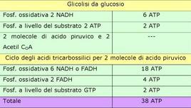 Tabella 1. Resa energetica in ATP nella respirazione aerobica