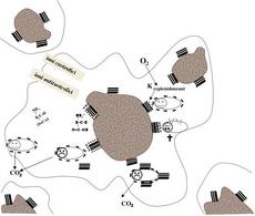 Figura 7. Rappresentazione delle attività microbiche in un microhabitat