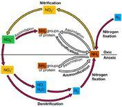 Figura 1. Ciclo dell'azoto