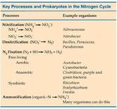 Figura 2. Processi e gruppi funzionali del ciclo dell'azoto