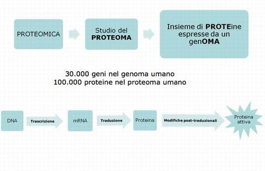 Un gene non codifica per una sola proteina!