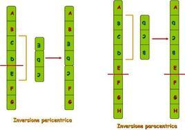 Immagine 5: Esempi di inversione di un cromosoma normale.