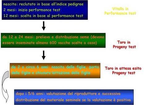 Schema di progeny test nella selezione di un toro da latte.