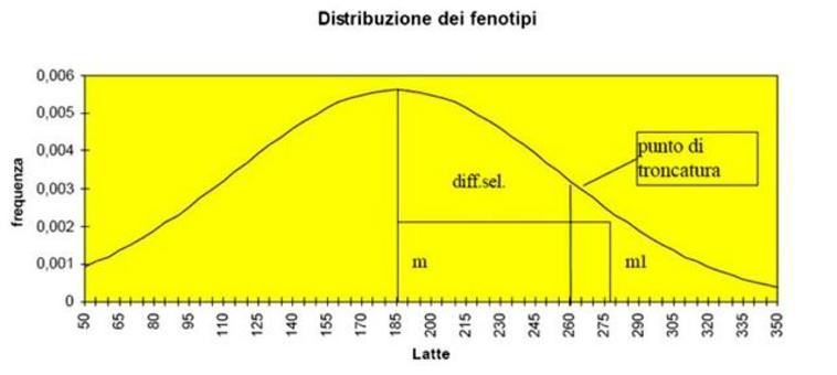 Esempio di troncatura della distribuzione normale dei fenotipi dovuta alla selezione del gruppo plusvariante.