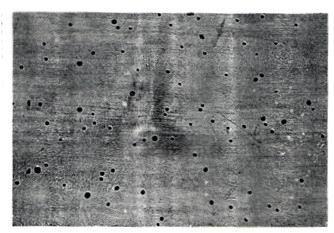 Aggressione da insetto xilofago (impropriamente detto taratura)