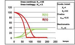 Figura 13 – Profili concentrazione-tempo in un fermentatore discontinuo.