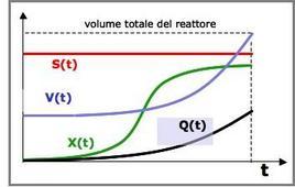 Figura 2 -Profili concentrazione-tempo in un fermentatore fed-batch.