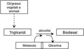 Figura 2 – Schema della produzione di biodiesel di I generazione.