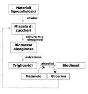 Figura 2 – Schema della produzione di biodiesel di II generazione da materiali lignocellulosici.
