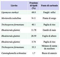 Tabella 1 – Valori della frazione di lipidi ottenuti con diverse specie di lieviti oleaginosi.
