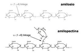 Figura 1 – Struttura chimica dell'amilosio e dell'amilopectina.