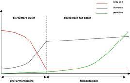 Figura 6 – Profili concentrazione-tempo nel corso della pre-fermentazione e della fermentazione della penicillina.