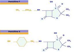 Figura 2 – Struttura chimica della penicillina F e della penicillina X.