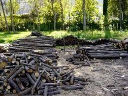 Segati del bosco ceduo