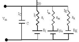 Schema circuitale del modello di Hodgkin-Huxley