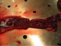 Cane: enterire necrotco-difteroide-emorragica.