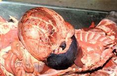 Cane. Torsione gastrica con dilatazione e spostamento della milza al centro della cavità addominale.
