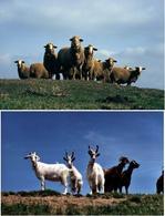 Gli ovini ed i caprini sono particolarmente sensibili all'infezione da Toxoplasma gondii.