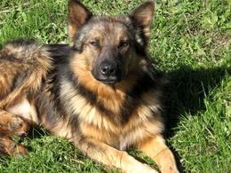 Il cane rappresenta un importante reservoir per numerose infezioni zoonotiche ad eziologia parassitaria, incluso quelle sostenute da Ancylostoma caninum.