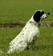 il cane è il principale reservoir di Dirofilaria immitis e Dirofilaria repens
