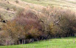 Pascolo secco habitat ideale per lo sviluppo di Dicrocoelium dendriticum.