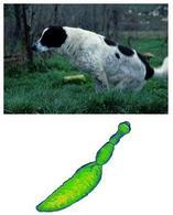 Il cane rappresenta il principale reservoir di Echinococcus granulosus .