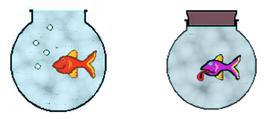 Il pesciolino rosso muore nella boccia chiusa (immagine modificata da Chemeet World)