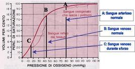 Curva di dissociazione dell'emoglobina (da Digila)