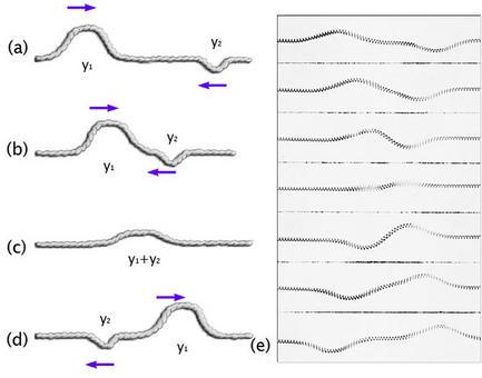 Interferenza di due impulsi ondulatori di segno opposto su una corda: dopo aver interferito, sottraendosi,  i due impulsi continuano a propagarsi con la stessa ampiezza e velocità che avevano prima dell'interferenza.  (Immagine modificata da Brooks, Cole – Thomson, 2006)