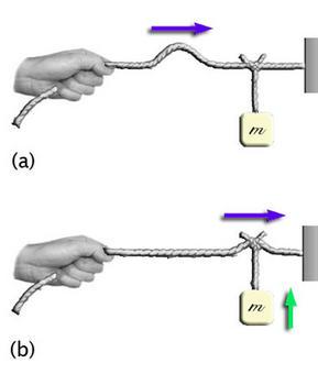Un impulso ondulatorio  al suo passaggio è in grado di compiere lavoro: quindi un'onda trasmette energia. (Immagine modificata da Brooks, Cole – Thomson, 2006)